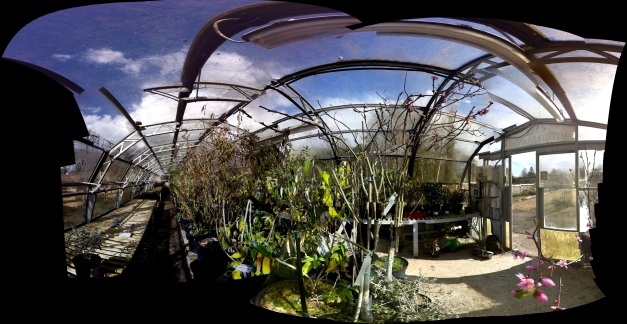 greenhouse, longstock park nursery