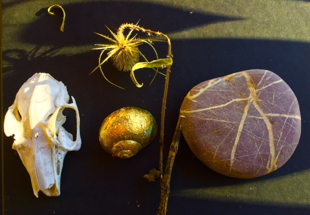 Seeds, Shells, Stones and Skulls