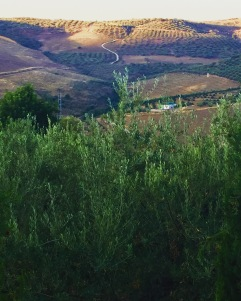 The morning light catches the brow of the hill across the valley from Casa Rosa