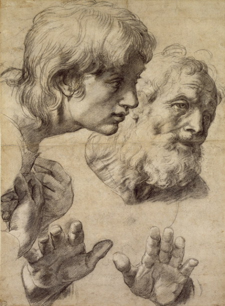 83-1520-studies-of-the-heads-of-two-apostles-and-of-their-hands-black-chalk-touched-with-white-on-greyish-paper-499-x-364-mm-the-ashmolean-museum-oxford